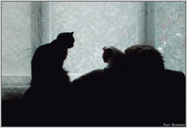 """фото """"Молчаливый диалог"""" метки: жанр, природа, домашние животные"""