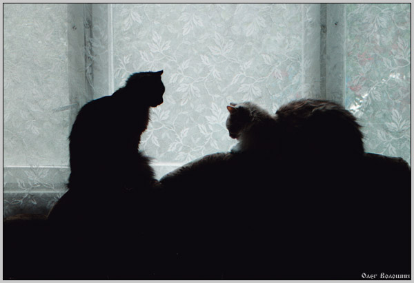 "photo ""Tacit dialogue"" tags: genre, nature, pets/farm animals"