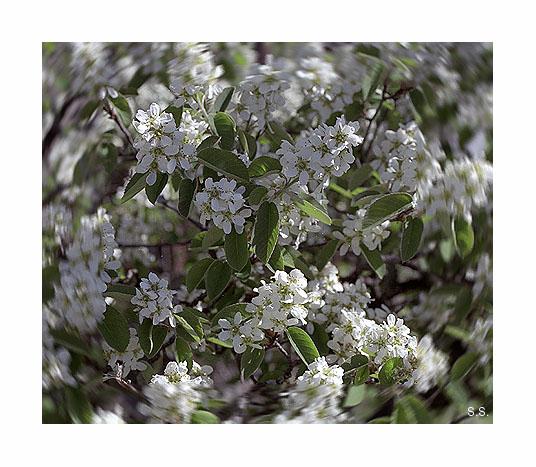 """фото """"Очень хочется ВЕСНЫ, для всех ВАС! С Новым Годом!"""" метки: природа, макро и крупный план, цветы"""
