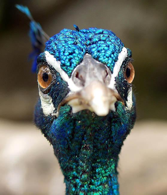 "photo ""Eye 2 Eye"" tags: nature, pets/farm animals"