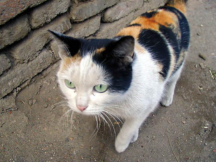 "photo ""A Wolk"" tags: travel, nature, pets/farm animals"