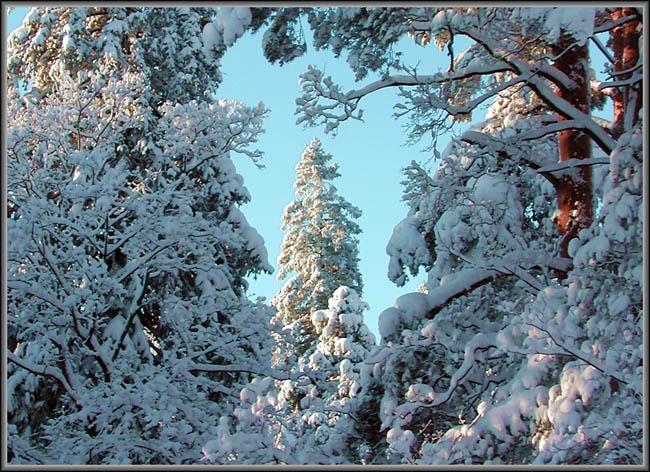 """фото """"Новый Год пришёл!"""" метки: пейзаж, зима"""