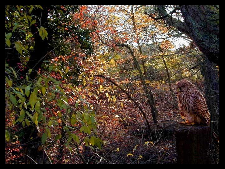 "фото ""Autumn Colors 1a"" метки: природа, жанр, цветы"