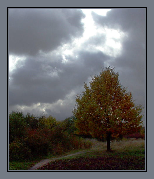 "photo ""Before a thunder-storm"" tags: landscape, autumn, forest"