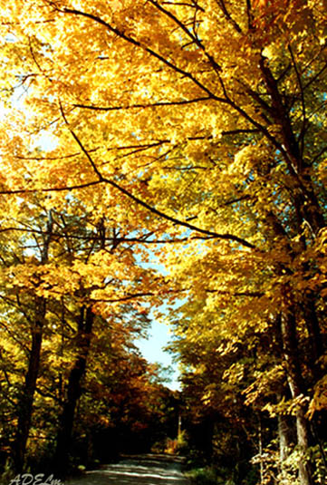 "photo ""Autumn Colors 4"" tags: nature, travel, North America, flowers"