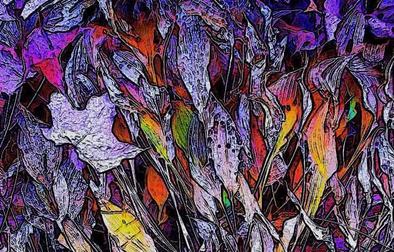 """photo """"Simpleton 4"""" tags: nature, landscape, autumn, flowers"""