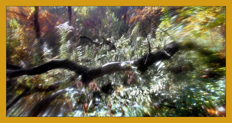 "photo ""Illusion"" tags: landscape, abstract, autumn"