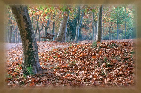 "photo ""Tardor en Riudarenes"" tags: landscape, autumn, forest"