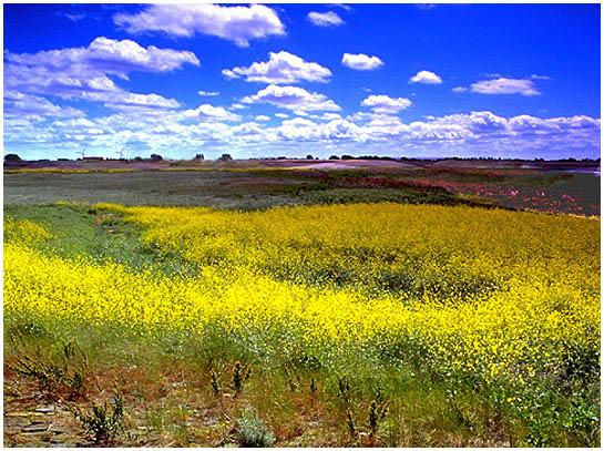 """фото """"`Polder in springtime`"""" метки: пейзаж, весна"""