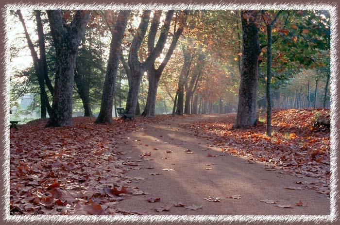 "photo ""TardorII"" tags: landscape, autumn, forest"