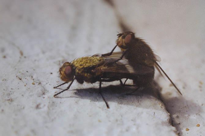 """фото """"Брачные игры."""" метки: макро и крупный план, природа, насекомое"""