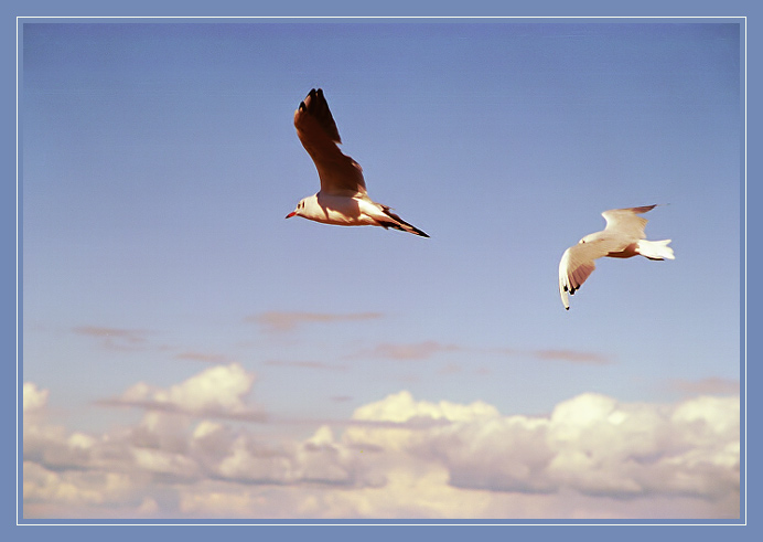 "photo ""Flight"" tags: nature, landscape, clouds, wild animals"