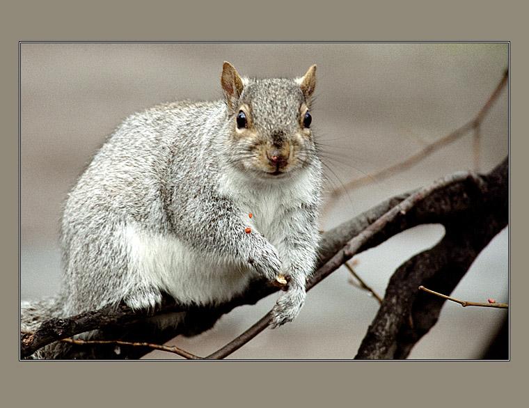 "photo ""Little glutton"" tags: nature, portrait, wild animals"