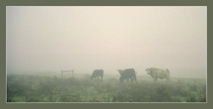 "photo ""Going to a fog"" tags: landscape, autumn"