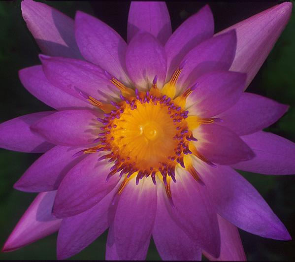 "фото ""NECTAR"" метки: природа, цветы"
