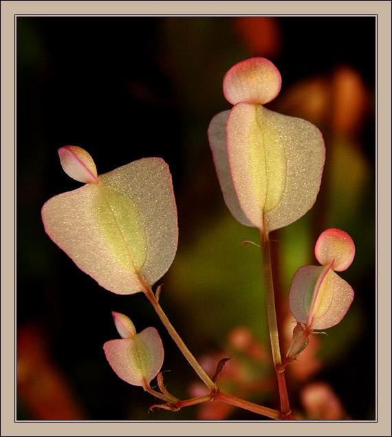 "photo ""F.l.o.w.e.r.s"" tags: nature, macro and close-up, flowers"