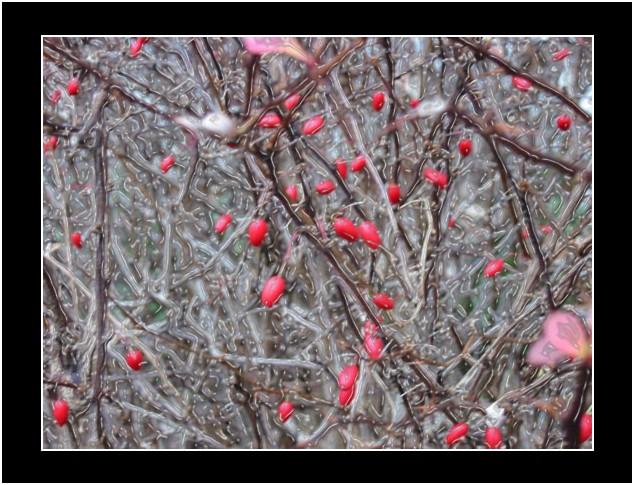 "фото ""замерзший"" метки: природа, фотомонтаж, цветы"