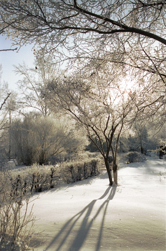 "photo ""Frosty day."" tags: landscape, winter"