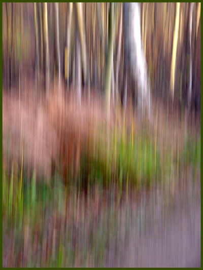 "photo ""Woodland Abstract"" tags: abstract,"