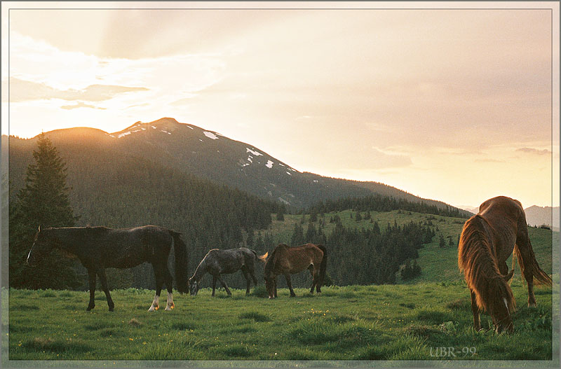 "photo ""About sunset with the mounting horses"" tags: landscape, nature, mountains"
