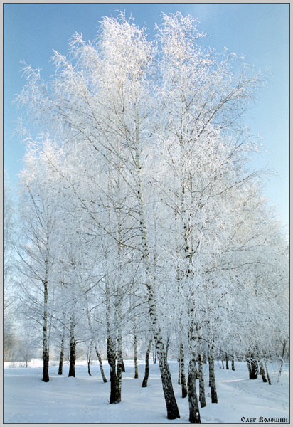 """photo """"February"""" tags: landscape, forest, winter"""