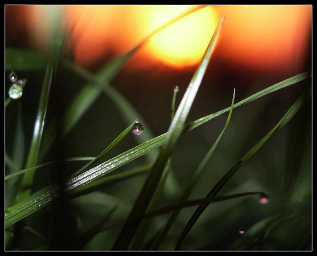 "photo ""At sunrise - II"" tags: landscape, macro and close-up, sunset"