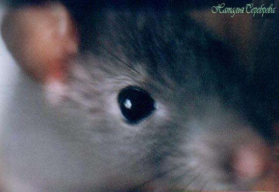 "photo ""New sight"" tags: nature, macro and close-up, pets/farm animals"