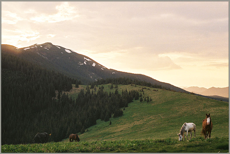 "photo ""About sunset with the mounting horses -2"" tags: nature, landscape, mountains"