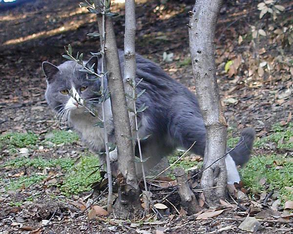 "photo ""Ambush (CATalog)"" tags: nature, pets/farm animals, wild animals"