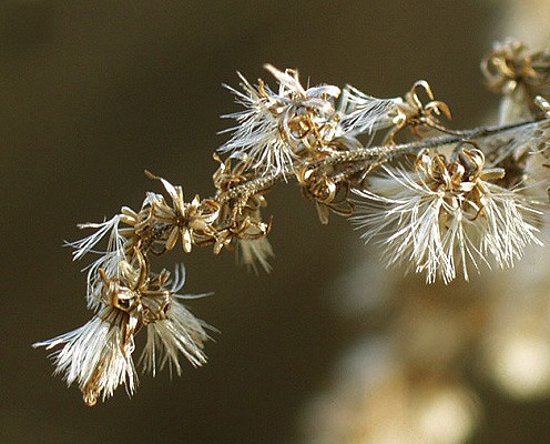 "photo ""Colors of Winter #5"" tags: macro and close-up, nature, flowers"