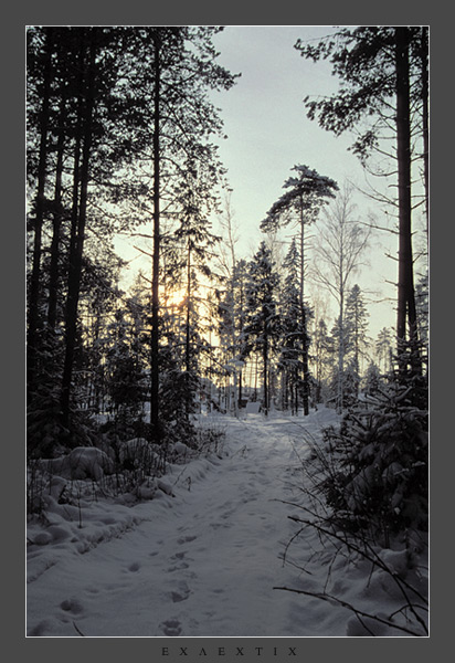 "photo ""Leaving a wood"" tags: landscape, forest, winter"
