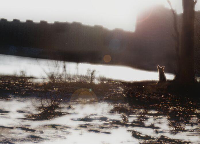 "photo ""Coast of hope..."" tags: nature, misc., pets/farm animals"