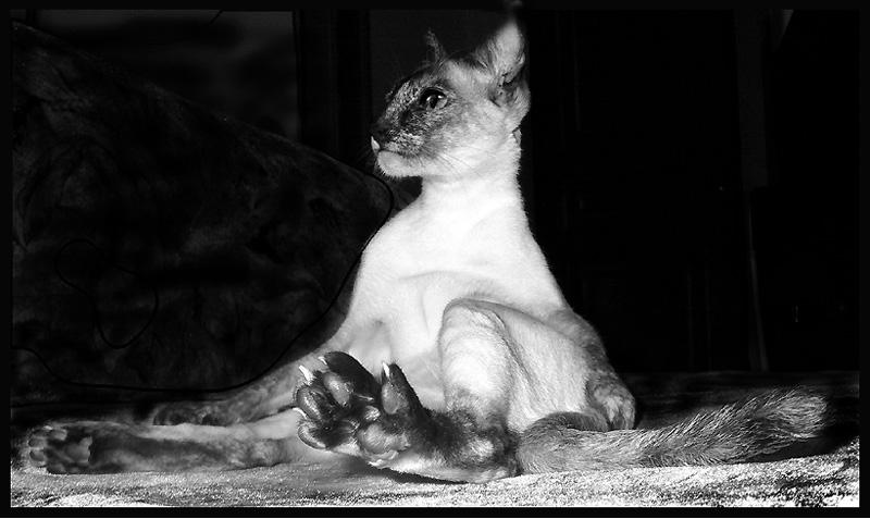 """фото """"""""Это нога..., у кого надо нога"""""""" метки: юмор, природа, домашние животные"""