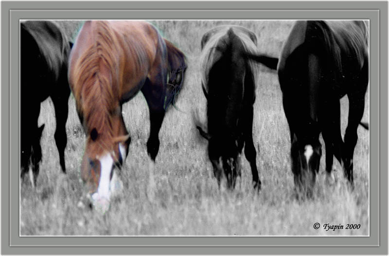 "photo ""Grazing Colts"" tags: nature, pets/farm animals"