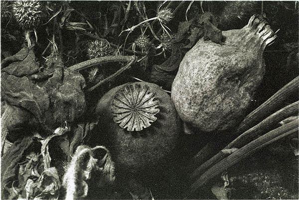 """фото """"Маки из Киева"""" метки: натюрморт, природа, цветы"""