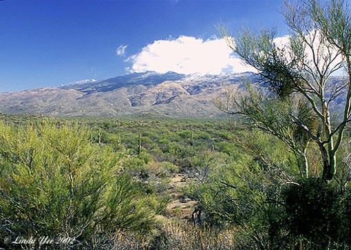 """фото """"December Desert Landscape"""" метки: пейзаж, путешествия, Северная Америка, горы"""