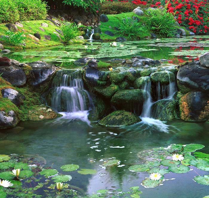"photo ""Water Garden"" tags: landscape, water"