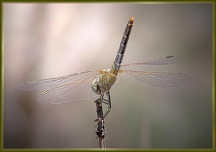 "фото ""*****"" метки: природа, насекомое"