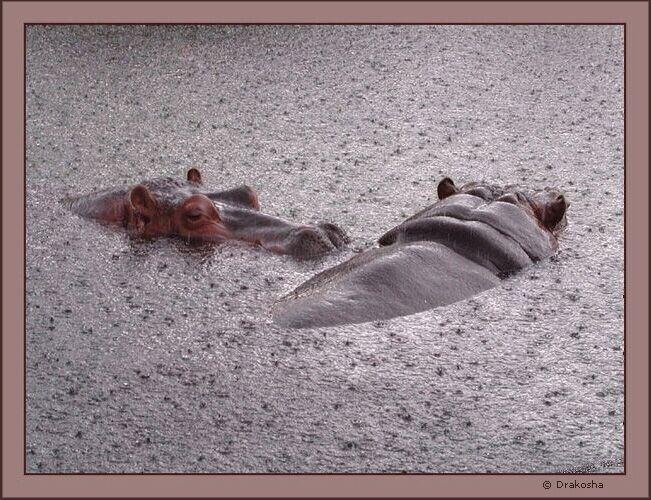 """фото """"Серо-розовое умиротворение"""" метки: природа, дикие животные"""