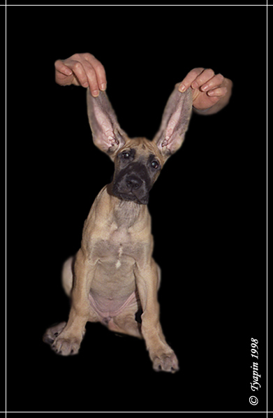 "photo ""Ears"" tags: nature, portrait, pets/farm animals"