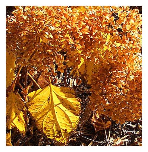 """photo """"*****"""" tags: landscape, nature, autumn, flowers"""