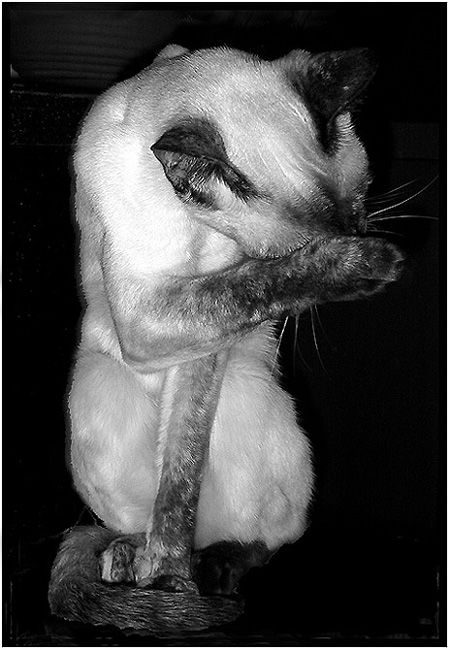 "photo """"_____"""" tags: nature, humor, pets/farm animals"