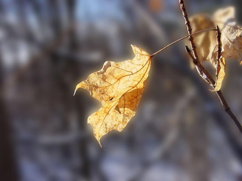 """фото """"Поймавший солнце"""" метки: макро и крупный план, фотомонтаж,"""