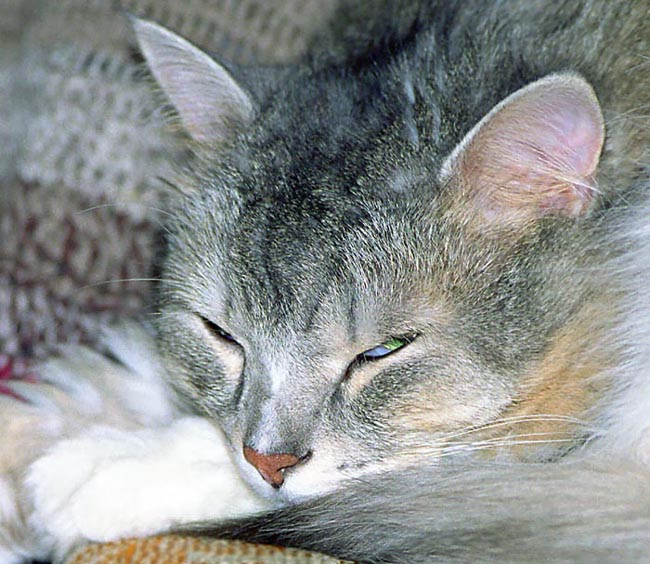 "photo ""Think I sleep?"" tags: nature, pets/farm animals"