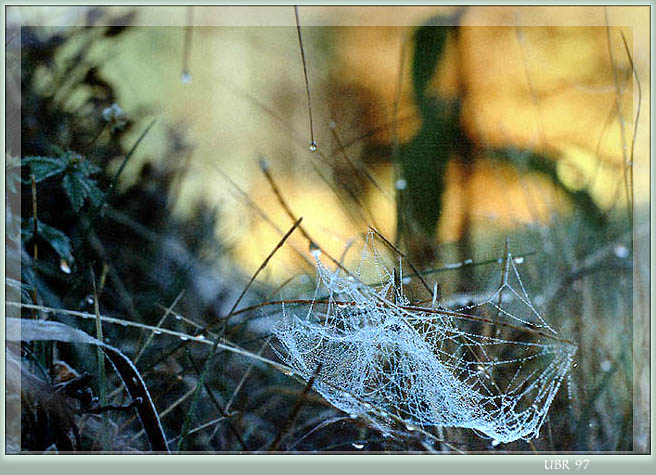"photo ""Autumnal web"" tags: nature, insect"