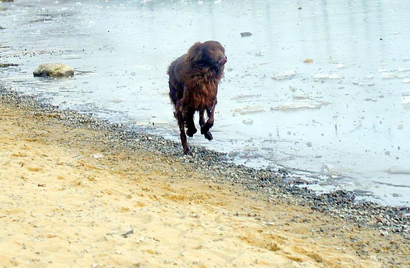 """фото """"Зимний Пикник"""" метки: природа, пейзаж, вода, домашние животные"""