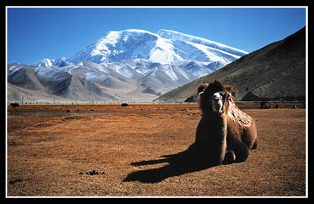 "photo ""Snowy Mountain & Camel"" tags: landscape, mountains"