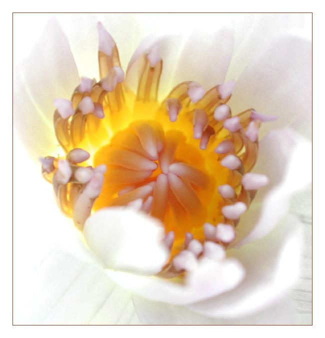 """фото """"Miracle Of Life"""" метки: макро и крупный план, природа, цветы"""