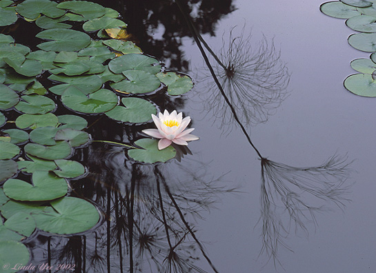 "photo ""Serenity"" tags: nature, landscape, flowers, water"