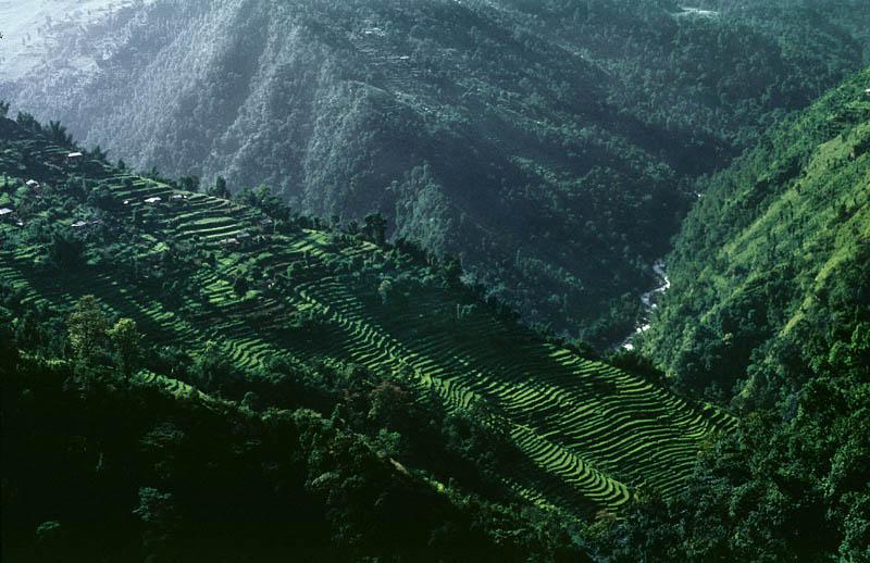 "photo ""Sikkim Terraces"" tags: travel, landscape, Asia, mountains"